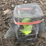 Seedling Guards