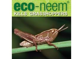 eco-neem now controls grasshoppers!