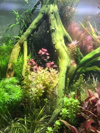 Underwater gardens by Nature Aquariums & Watergardens