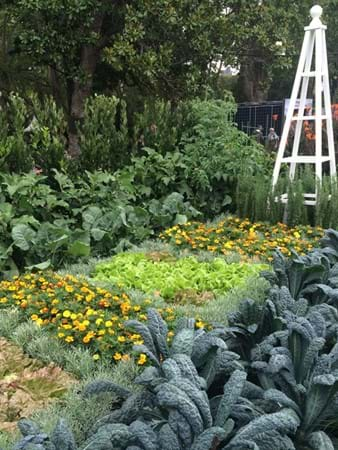 Perfect veggie patch at the Inspiration garden display by leading retail nurseries
