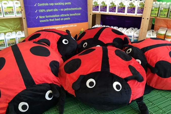 Our ladybeetles were busting to meet the crowd!
