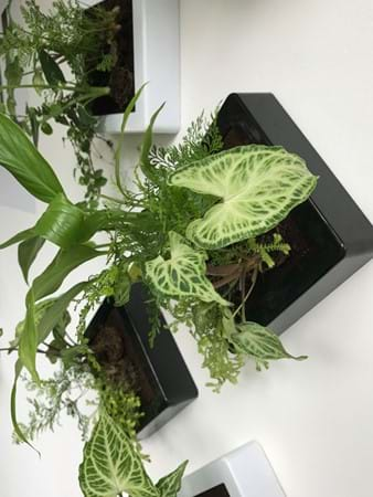 New planter designs from miplant which can be displayed on walls or a work desk