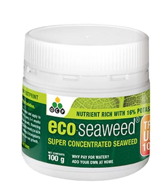eco-seaweed 100g