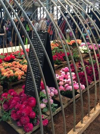Huge display of charming dahlias by The Road Stall