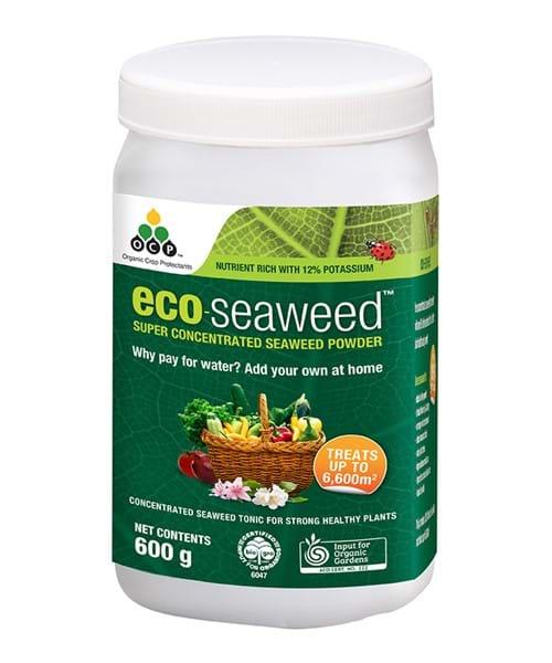 eco-seaweed 600g ANZ