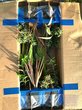 How the team at Australian Plants Online safely ship their mail order plants