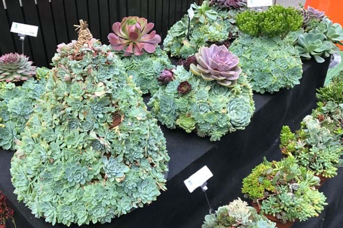 Amazing potted succulents by Vertical Walls