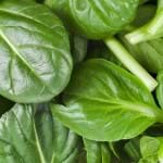 Spinach (English)