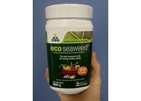 eco-seaweed just got bigger!